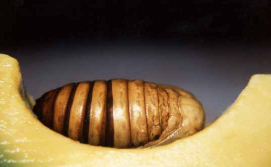 http://www.comby.org/photos/insectes/im3.jpg